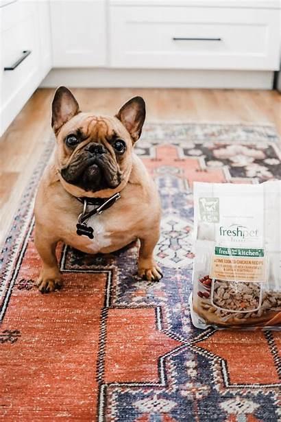 Dog Names Boy Unique French Bulldog Puppy