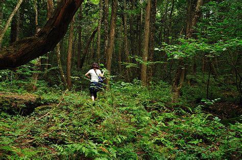Fileaokigahara Forest 03jpg  Wikimedia Commons