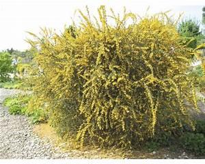 Pflanzen Immergrün Winterhart : pflanzen set vorgarten immergr n 6 3 stk bei hornbach kaufen ~ Markanthonyermac.com Haus und Dekorationen