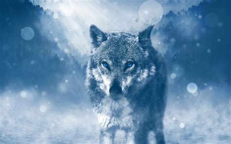 fondos de escritorio hd lobos fondos de pantalla