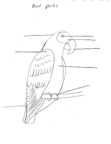 langkah pertama diprasekolah lembaran kerja tema burung