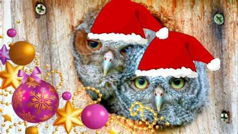 merry christmas owl images we wish you a merry christmas baby owls youtube