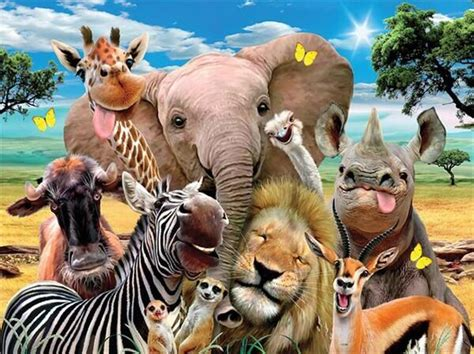 group  wild animals  diamond painting kits oloee