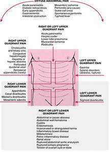 Diagram Quadrants Of The Abdomen