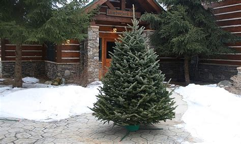 best rated fresh trees delivered to home fresh cut tree groupon goods