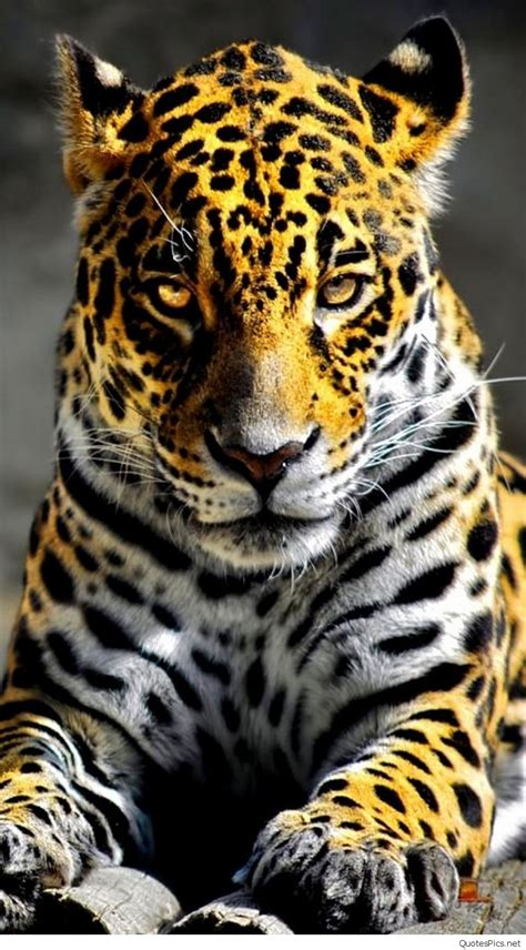 Animal Iphone Wallpaper - best mobile iphone animal wallpapers 2016 2017