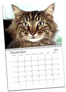 cat calendar catquestions kujuku wins spot on cat calendar cat questions