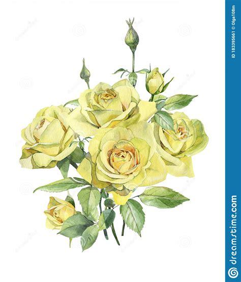 Bush Of Yellow Watercolor Roses Flowers Stock Illustration