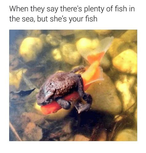 Fish In The Sea Meme - funny plenty of fish memes of 2016 on sizzle