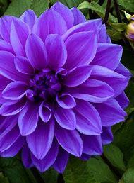 Purple Color Flowers