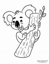 Koala Coloring Abc sketch template