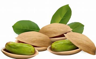 Nuts Pistachio Nut Clipart Clip Tree Cartoon