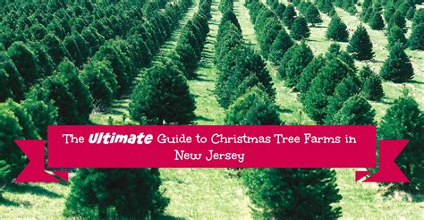 the ultimate guide to new jersey christmas tree farms