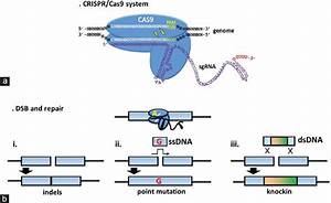 Advantages Of Using The Crispr  Cas9 System Of Genome