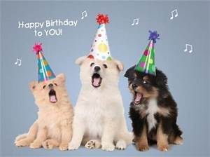 Happy Birthday Dog Images, Funny Dog Birthday Pictures