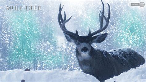 deer wallpapers animal spot