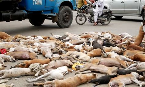 stray dogs poisoned  death  treated  trash