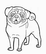 Pug Coloring Pig Pages Colouring Crafts Pugs Dog Burning Wood Animal Funny Adult Puppies sketch template