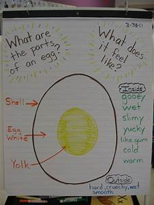 Parts Of An Egg Preschool
