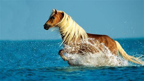 壁紙 水で走る馬 1920x1200 Hd 無料のデスクトップの背景, 画像