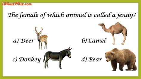 lilquizwhiz animal kingdom  learning