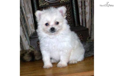 Non Shedding Small Breeds by Non Shedding Small Dogs Mixed Breeds Images Frompo