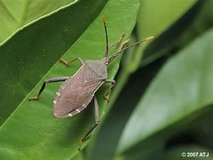 True Bugs 2 - Andrew Trevor-jones