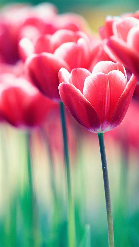 wallpaper spring flowers bloom bokeh blossom garden