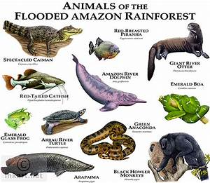 Animals of the Flooded Amazon Rainforest | Fine art ...