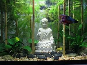 Deco Aquarium Zen : zen buddha rock garden aquascape aquascape ~ Melissatoandfro.com Idées de Décoration