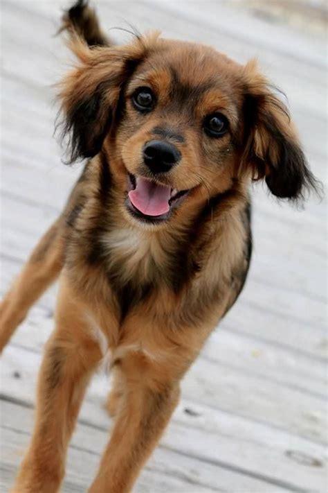 Augi - My Dog Breeders - Part 49