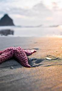 Red Starfish Wallpaper for iPhone X, 8, 7, 6 - Free ...