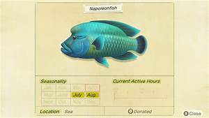 Guide  New Bugs And Fish Arriving In July For Animal