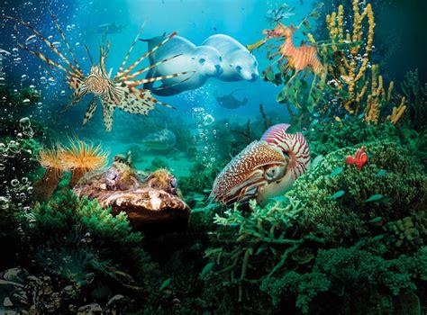 Under The Sea 3d  Imax Melbourne