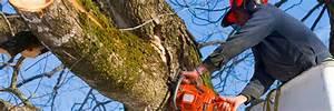 Abattage D Arbres Autorisation : abattage et ou cimage d arbres ville de sainte th r se ~ Premium-room.com Idées de Décoration