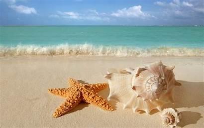 Starfish Beach Sand Seashells 1024 Above Screen