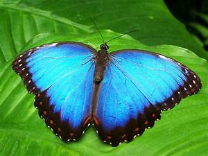 10 Most Amazing And Beautiful Butterflies In The World
