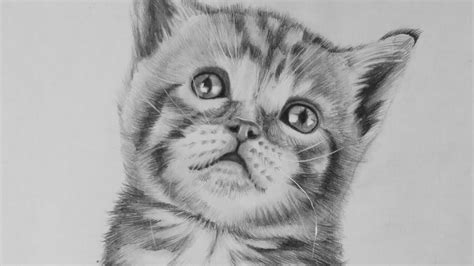Drawing A Realistic Baby Kitten