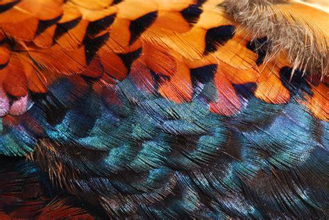 Bird Feathers Close Up