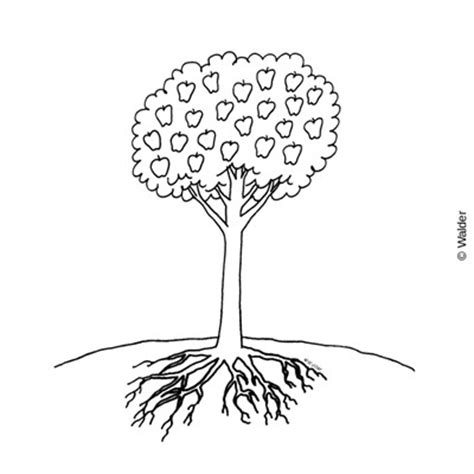 apple tree with roots drawing apple tree with roots walder education