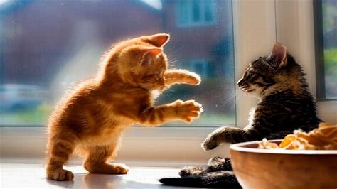 Funny Kittens Compilation April 2016