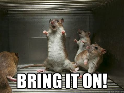 Rat Meme - we ve got rats update sootoday com