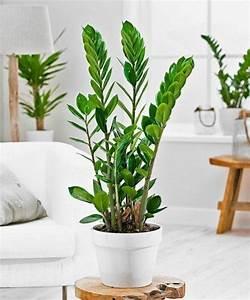 Pflanzen Fürs Büro Wenig Licht Sch Ne Zimmerpflanzen Die Wenig