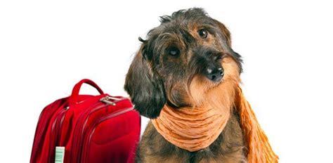 animali in cabina alitalia cani e gatti in aereo compagnie aeree accettano
