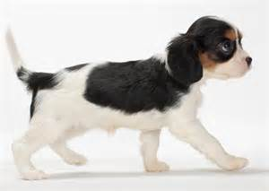 dog breeds that do not shed dog training home dog types