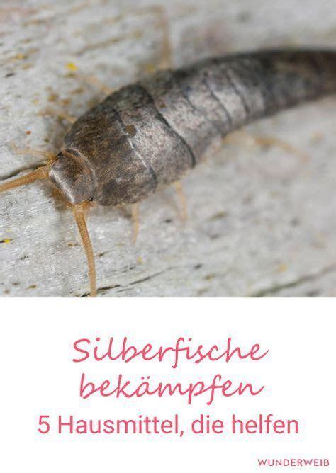 große spinnen im haus was tun was hilft gegen spinnen im haus mittel gegen spinnen haus spinnen tiere arten giftige bek