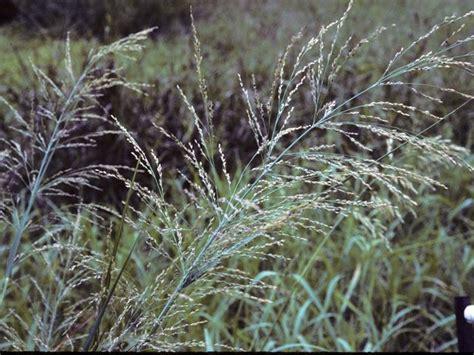 75 Best Images About Houston Native Plants On Pinterest