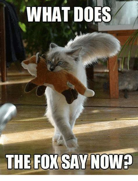 What Does Memes What Does The Fox Say Nowp Doe Meme On Me Me