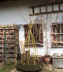 Rankgerüst Selber Bauen : lebendes rankger st f r bohnen aus goldweide weidenbau ~ A.2002-acura-tl-radio.info Haus und Dekorationen