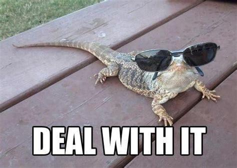 Bearded Dragon Memes - bearded dragon funny bearded dragon and dragon on pinterest